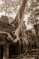 cambodia, Ta Prohm Temple, angkor
