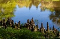 Arboretum de la balaine , Allier