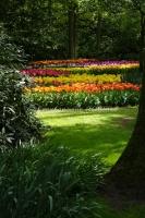 Parc Keukenhoff, Hollande