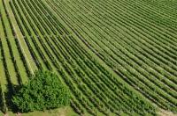 Vignoble Cornas, Ardèche