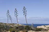 Sagres, Algarve, portugal